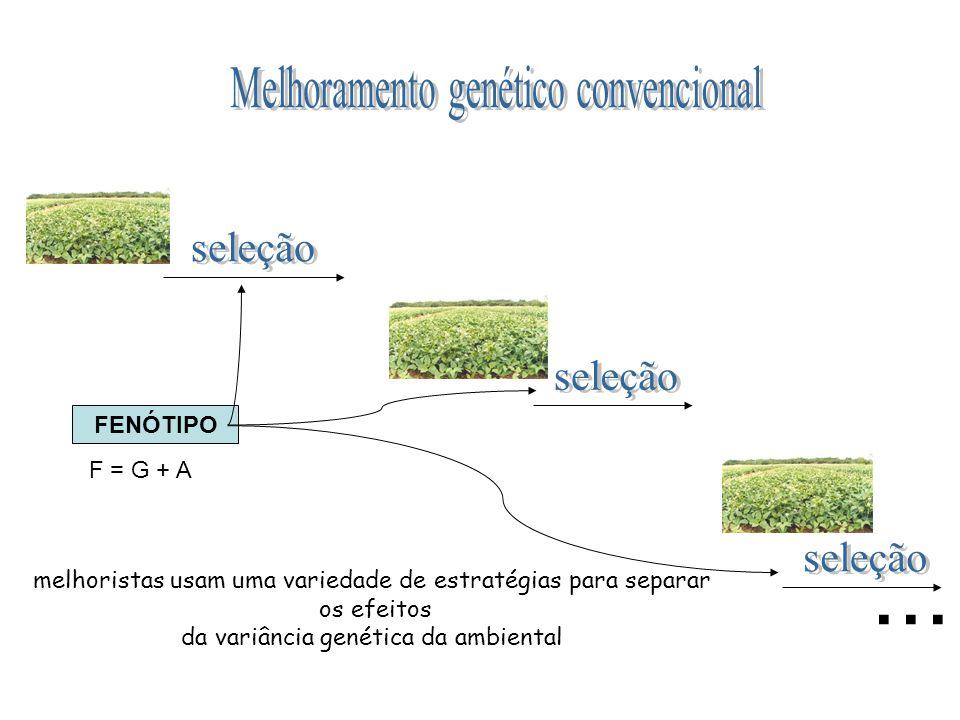 FENÓTIPO melhoristas usam uma variedade de estratégias para separar os efeitos da variância genética da ambiental... F = G + A