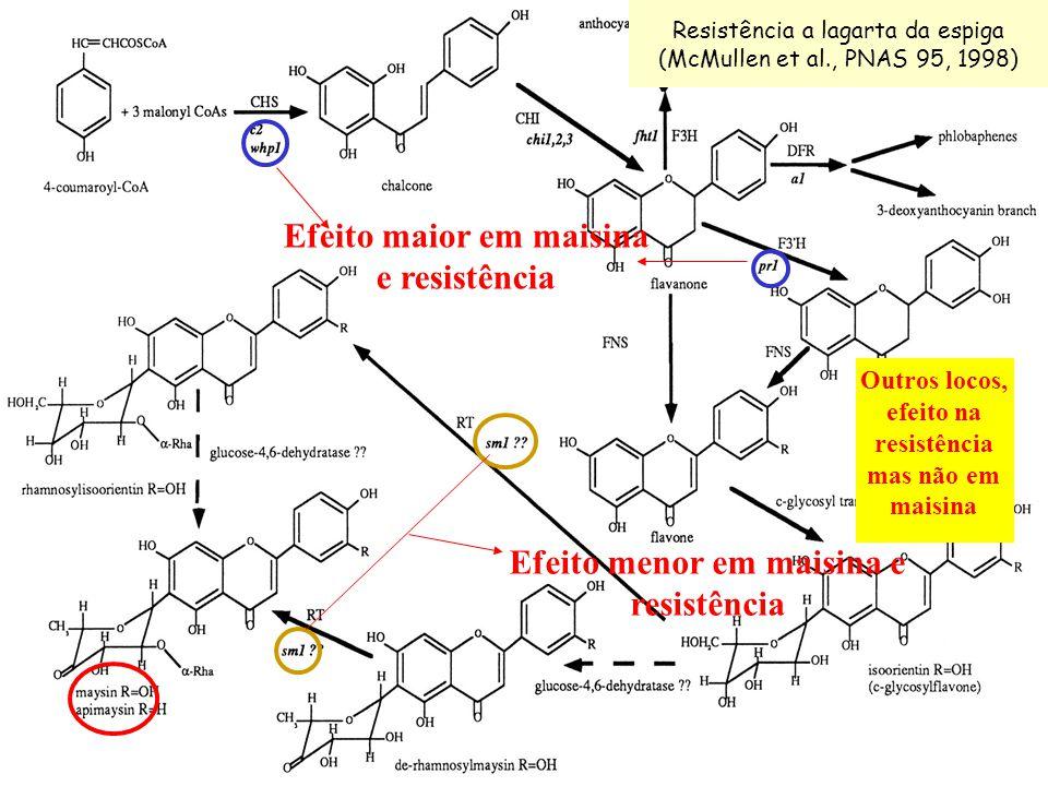 Efeito menor em maisina e resistência Resistência a lagarta da espiga (McMullen et al., PNAS 95, 1998) Efeito maior em maisina e resistência Outros lo