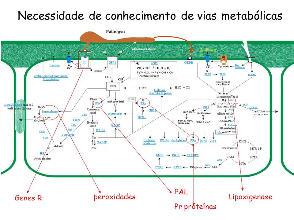 PAL peroxidades Lipoxigenase Necessidade de conhecimento de vias metabólicas Genes R Pr proteínas