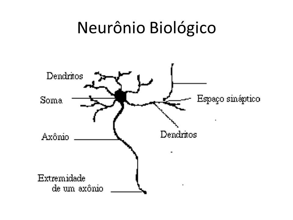 Conceitos importantes Axônio: responsável pela transmissão de sinais a partir do corpo celular.