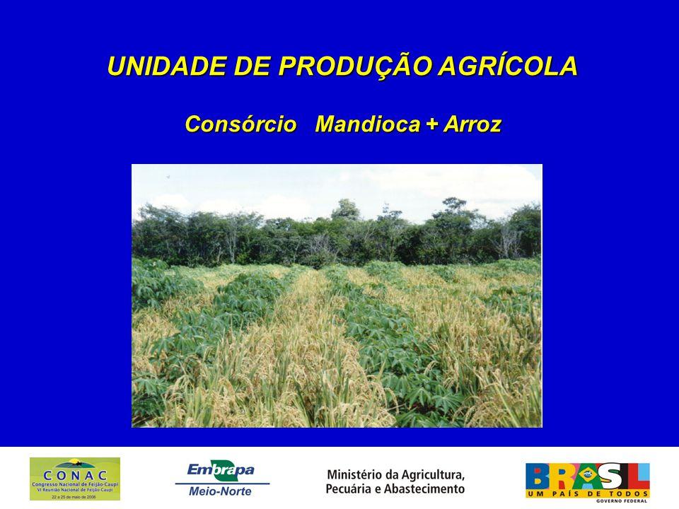 UNIDADE DE PRODUÇÃO AGRÍCOLA Consórcio Mandioca + Arroz