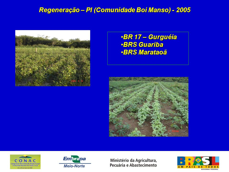 Regeneração – PI (Comunidade Boi Manso) - 2005 BR 17 – GurguéiaBR 17 – Gurguéia BRS GuaribaBRS Guariba BRS MarataoãBRS Marataoã