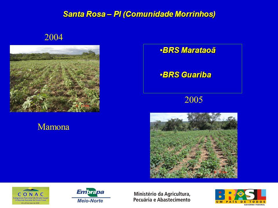Santa Rosa – PI (Comunidade Morrinhos) 2004 2005 BRS MarataoãBRS Marataoã BRS GuaribaBRS Guariba Mamona