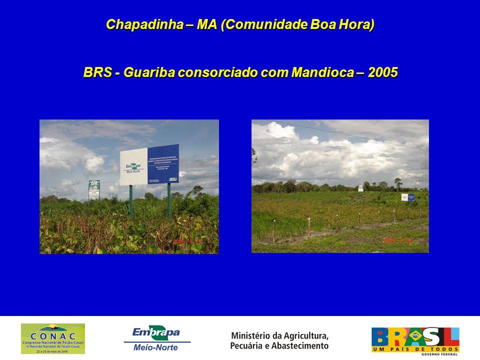 Chapadinha – MA (Comunidade Boa Hora) BRS - Guariba consorciado com Mandioca – 2005