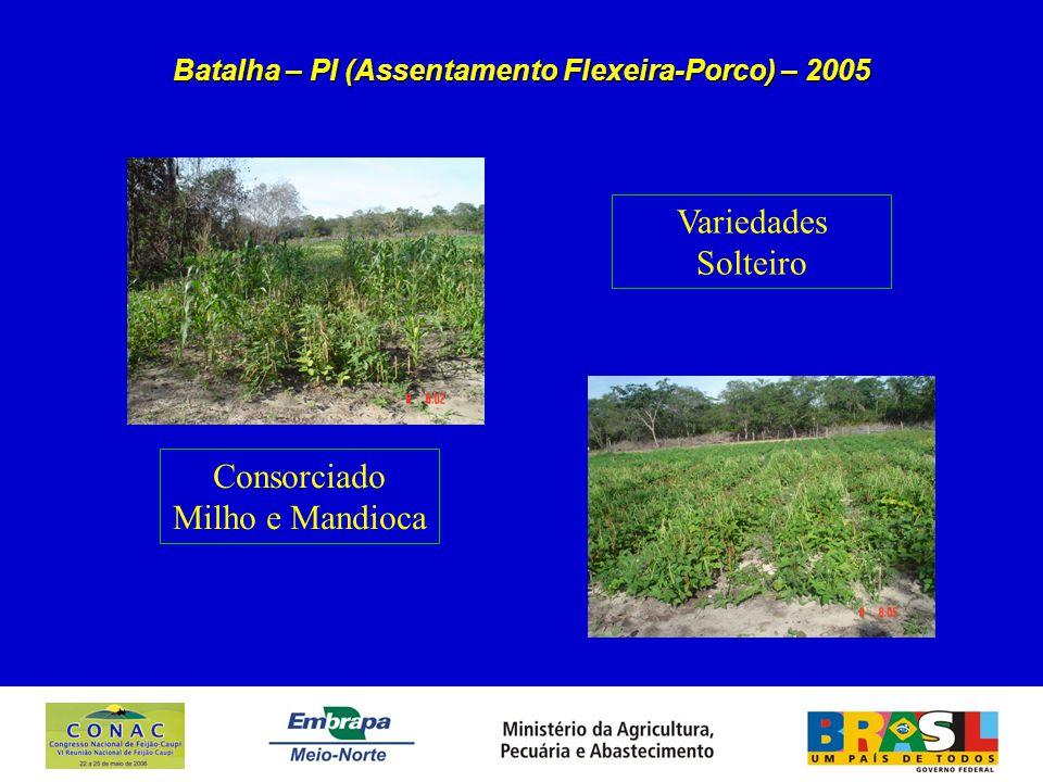 Batalha – PI (Assentamento Flexeira-Porco) – 2005 Consorciado Milho e Mandioca Variedades Solteiro