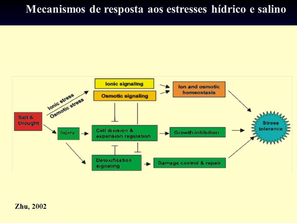 Zhu, 2002 Mecanismos de resposta aos estresses hídrico e salino