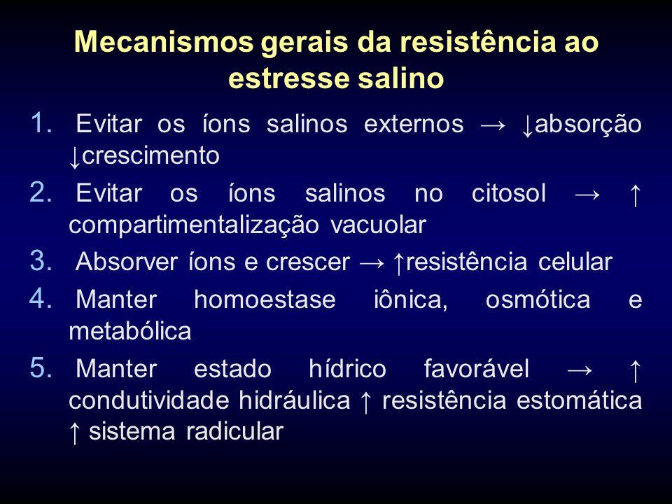 Mecanismos gerais da resistência ao estresse salino 1. Evitar os íons salinos externos → ↓absorção ↓crescimento 2. Evitar os íons salinos no citosol →