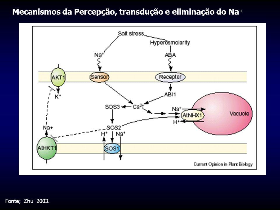 Fonte; Zhu 2003. Mecanismos da Percepção, transdução e eliminação do Na +