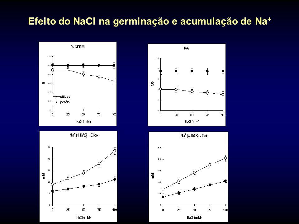 Efeito do NaCl na germinação e acumulação de Na +