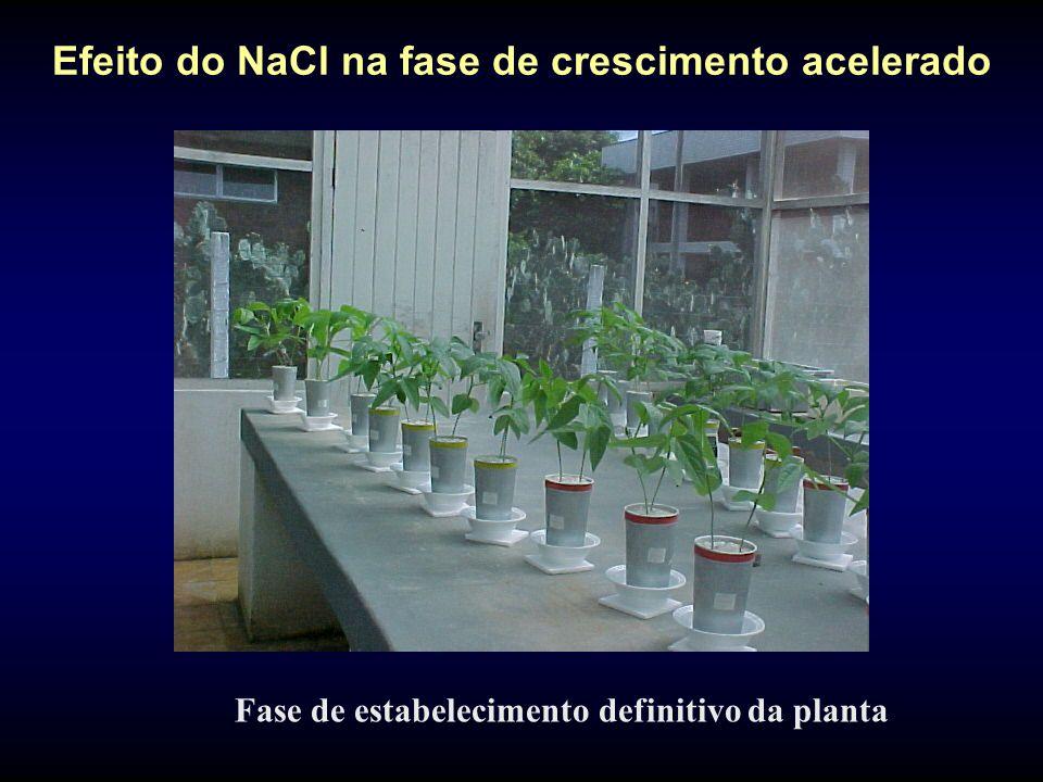 Efeito do NaCl na fase de crescimento acelerado Fase de estabelecimento definitivo da planta