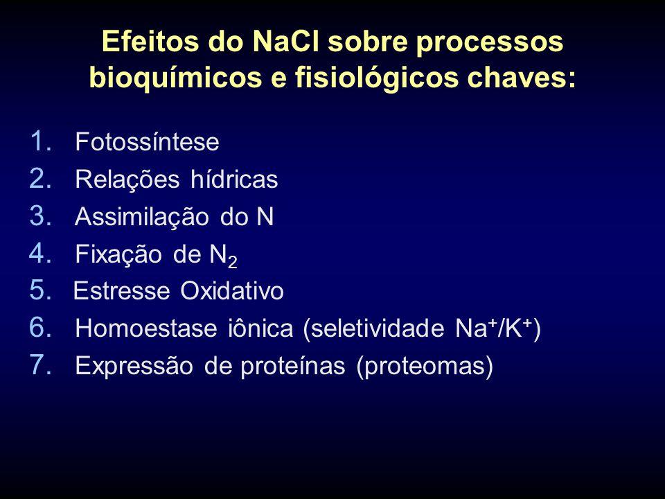 Efeitos do NaCl sobre processos bioquímicos e fisiológicos chaves: 1. Fotossíntese 2. Relações hídricas 3. Assimilação do N 4. Fixação de N 2 5. Estre