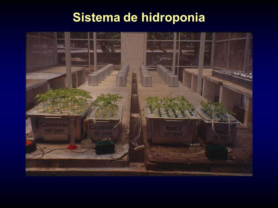 Sistema de hidroponia