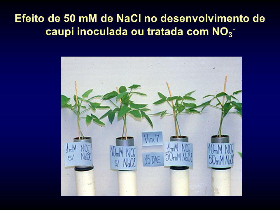 Efeito de 50 mM de NaCl no desenvolvimento de caupi inoculada ou tratada com NO 3 -