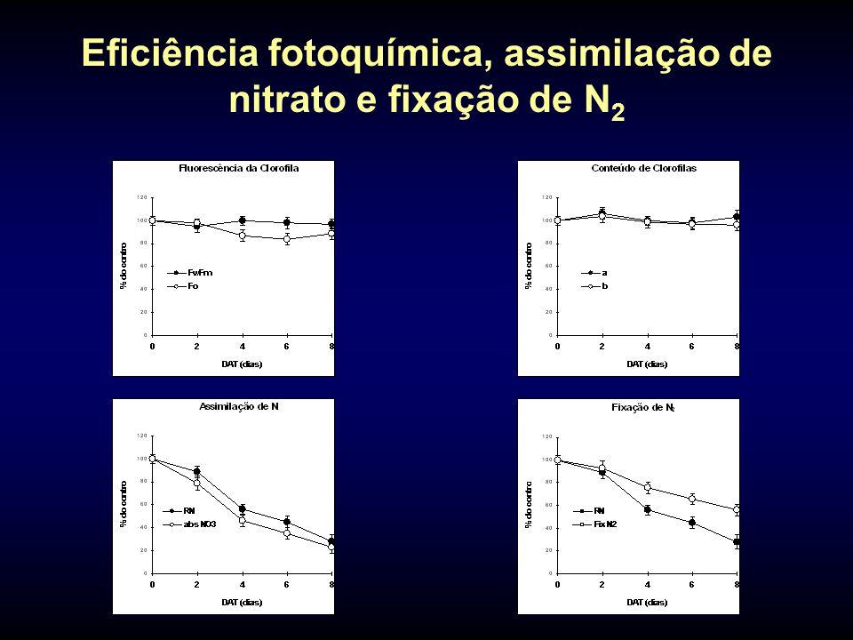 Eficiência fotoquímica, assimilação de nitrato e fixação de N 2