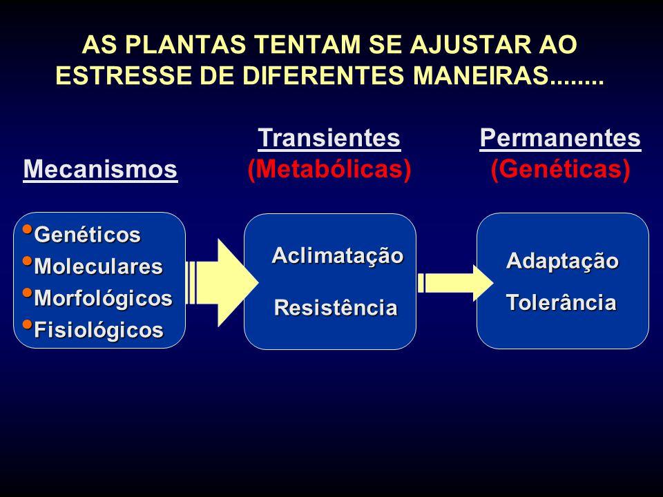 Adaptação Tolerância AS PLANTAS TENTAM SE AJUSTAR AO ESTRESSE DE DIFERENTES MANEIRAS........ Genéticos Genéticos Moleculares Moleculares Morfológicos