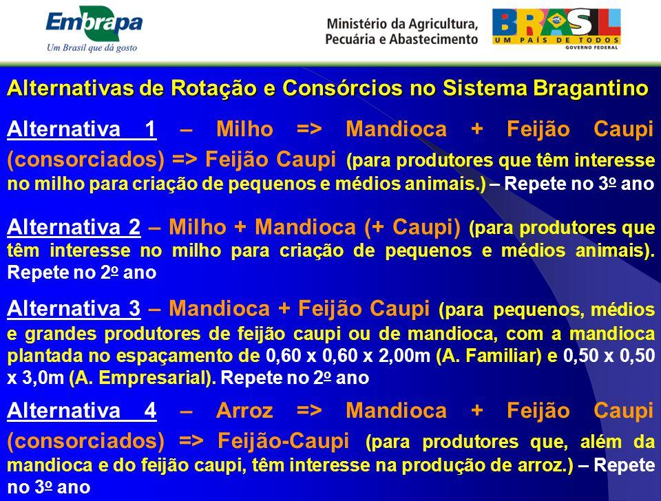 Alternativas de Rotação e Consórcios no Sistema Bragantino Alternativa 1 – Milho => Mandioca + Feijão Caupi (consorciados) => Feijão Caupi (para produ
