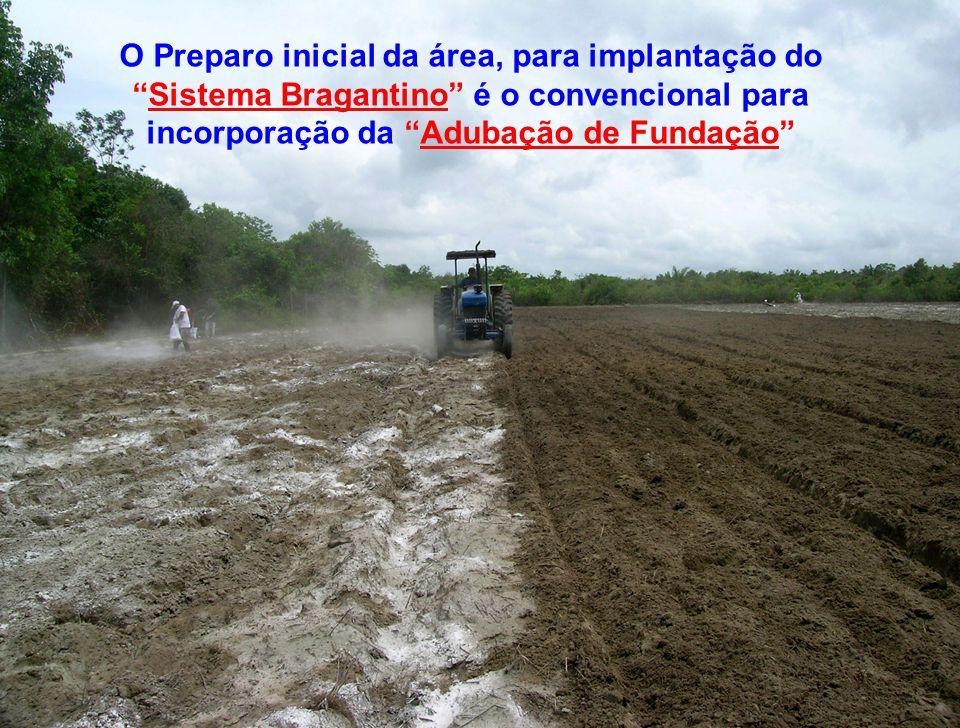 """O Preparo inicial da área, para implantação do """"Sistema Bragantino"""" é o convencional para incorporação da """"Adubação de Fundação"""""""