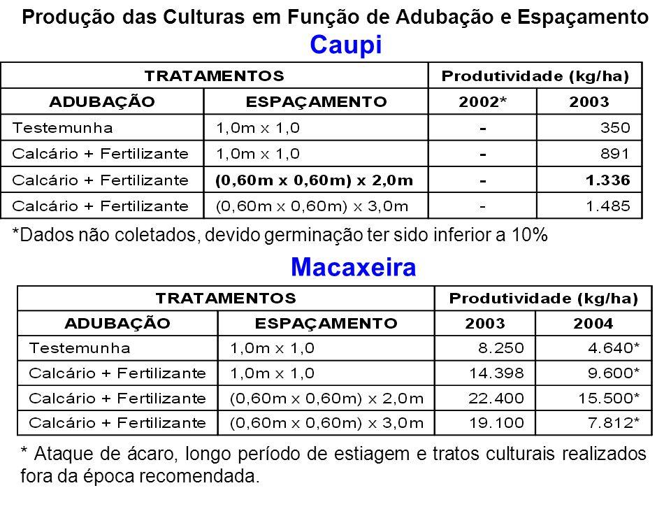 Produção das Culturas em Função de Adubação e Espaçamento Caupi *Dados não coletados, devido germinação ter sido inferior a 10% Macaxeira * Ataque de