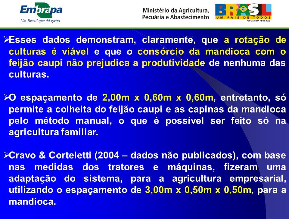  Esses dados demonstram, claramente, que a rotação de culturas é viável e que o consórcio da mandioca com o feijão caupi não prejudica a produtividad