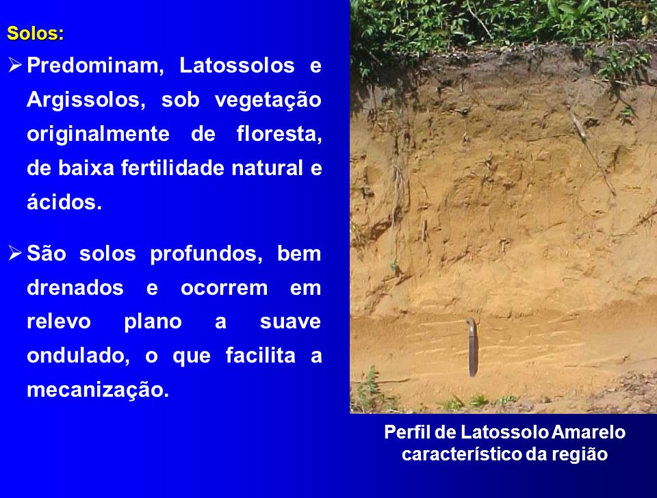 Solos:  Predominam, Latossolos e Argissolos, sob vegetação originalmente de floresta, de baixa fertilidade natural e ácidos.  São solos profundos, b