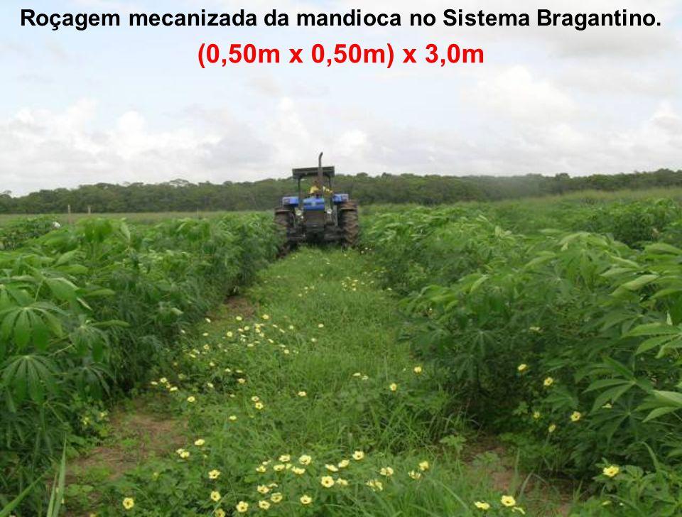 Roçagem mecanizada da mandioca no Sistema Bragantino. (0,50m x 0,50m) x 3,0m