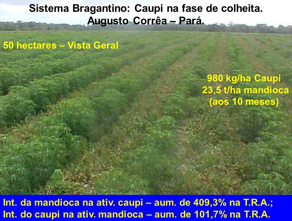 50 hectares – Vista Geral 980 kg/ha Caupi 23,5 t/ha mandioca (aos 10 meses) Int. da mandioca na ativ. caupi – aum. de 409,3% na T.R.A.; Int. do caupi