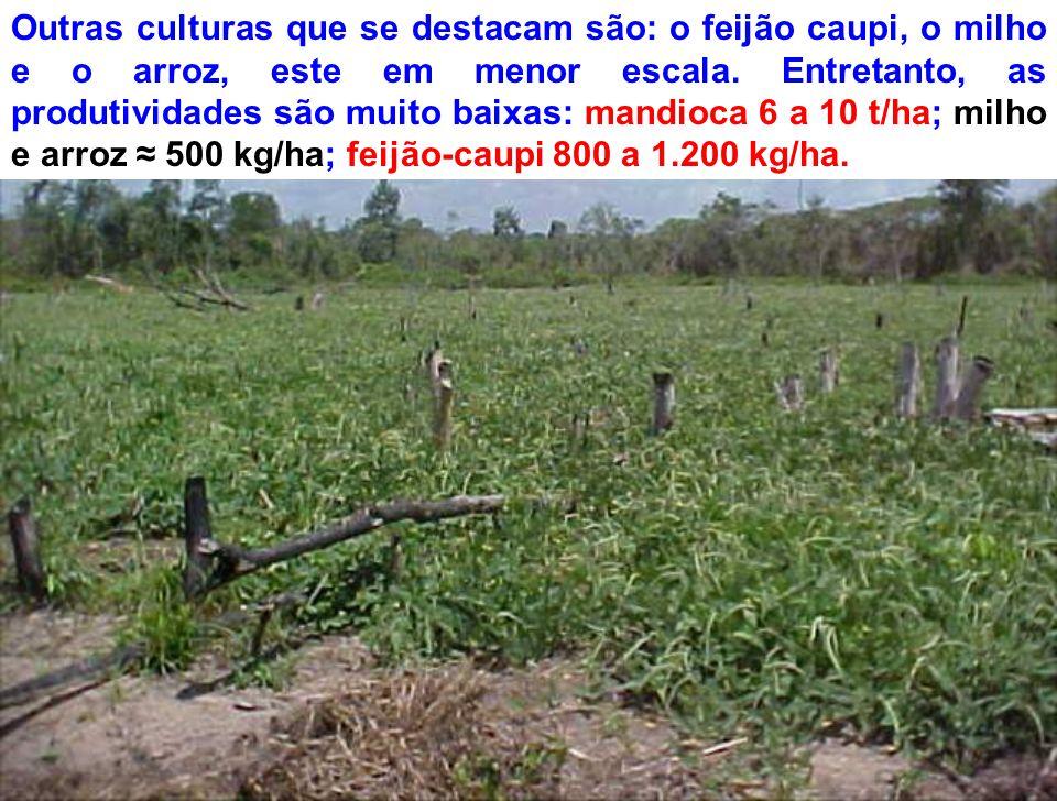 Outras culturas que se destacam são: o feijão caupi, o milho e o arroz, este em menor escala. Entretanto, as produtividades são muito baixas: mandioca