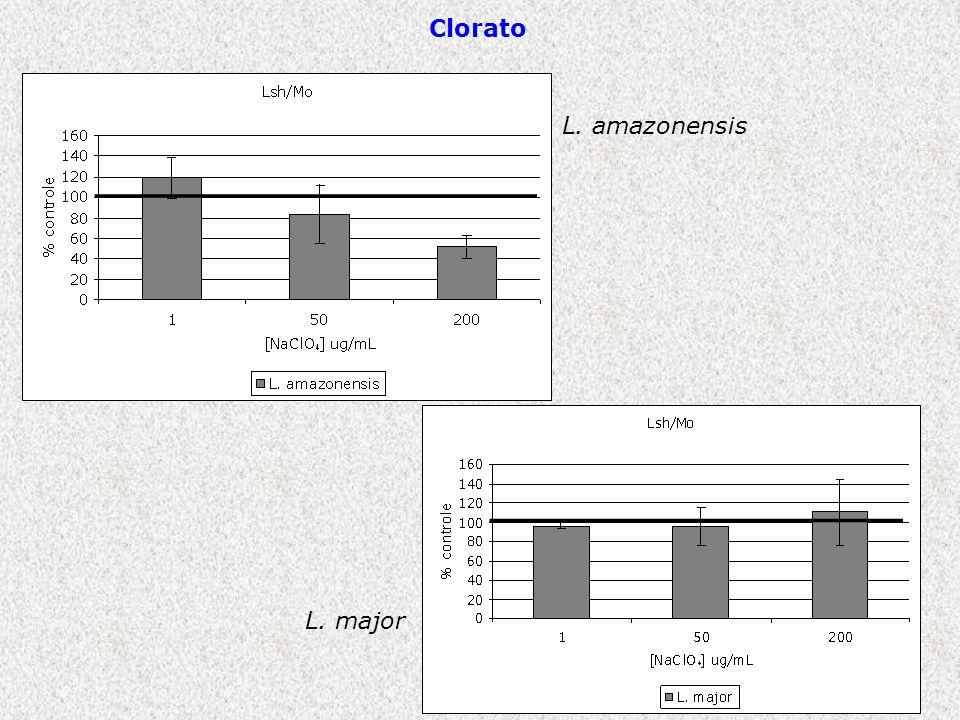 L. amazonensis L. major Clorato