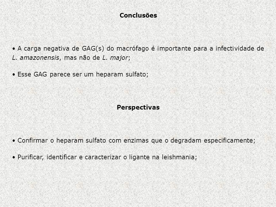 Conclusões A carga negativa de GAG(s) do macrófago é importante para a infectividade de L. amazonensis, mas não de L. major; Esse GAG parece ser um he