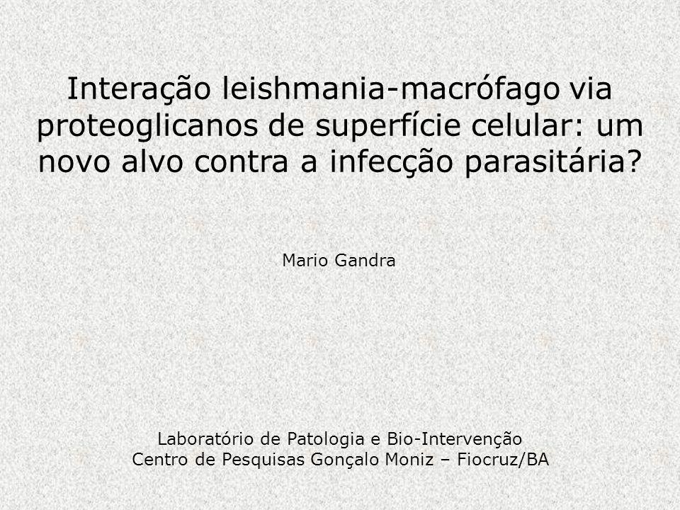 Interação leishmania-macrófago via proteoglicanos de superfície celular: um novo alvo contra a infecção parasitária? Laboratório de Patologia e Bio-In