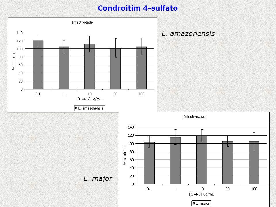 L. amazonensis L. major Condroitim 4-sulfato