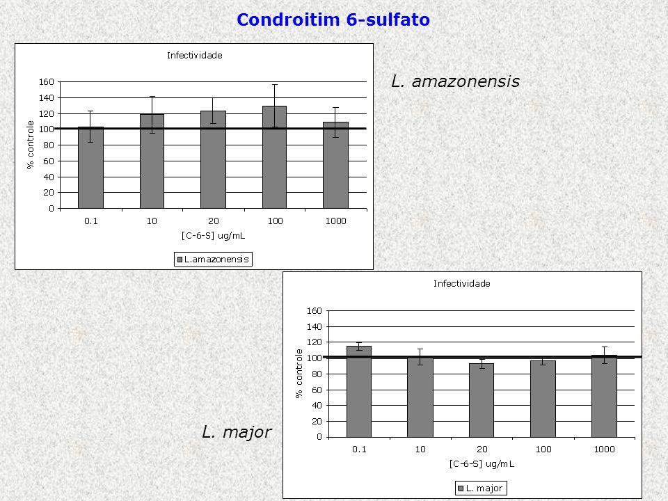 L. amazonensis L. major Condroitim 6-sulfato