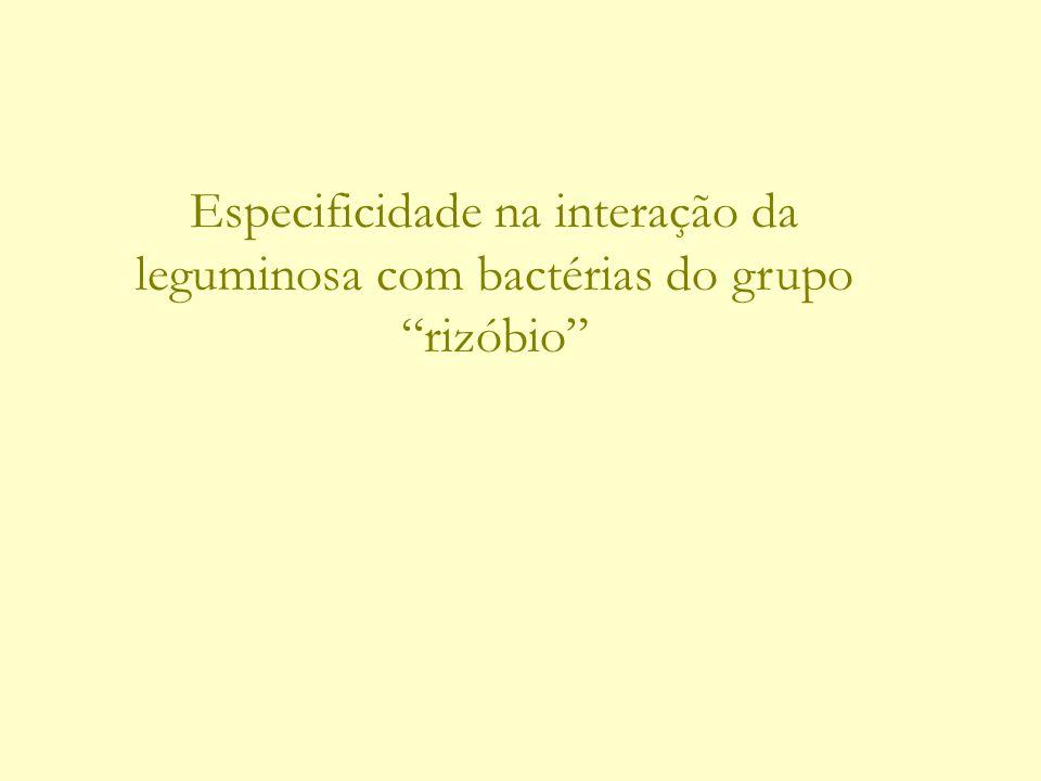 Especificidade na interação da leguminosa com bactérias do grupo rizóbio