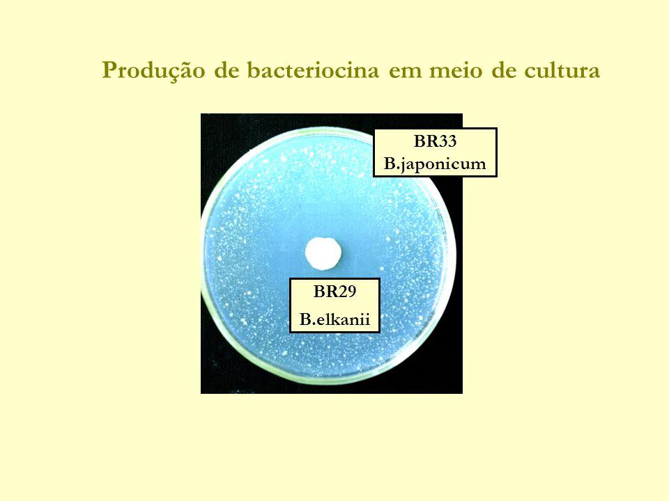 Produção de bacteriocina em meio de cultura BR29 B.elkanii BR33 B.japonicum