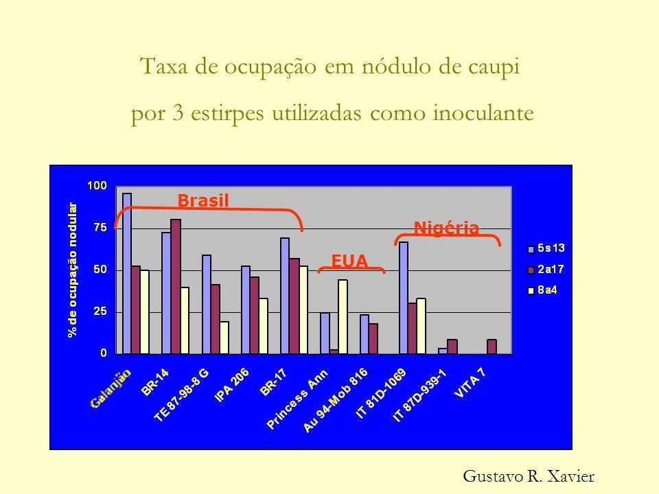 Taxa de ocupação em nódulo de caupi por 3 estirpes utilizadas como inoculante Brasil EUA Nigéria Gustavo R.