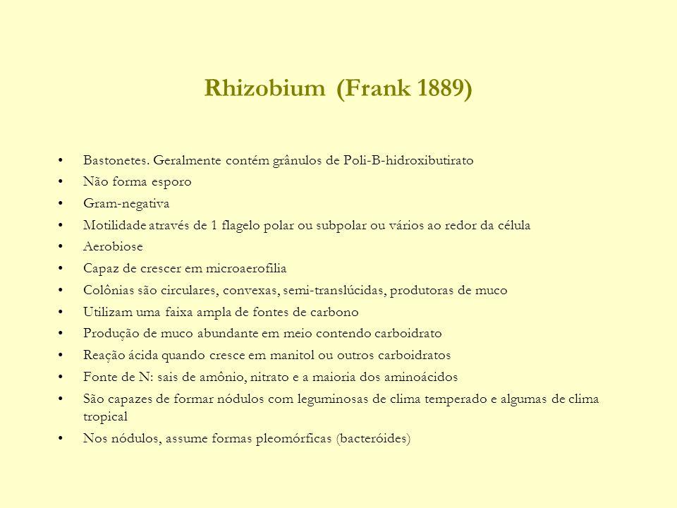 Rhizobium (Frank 1889) Bastonetes.