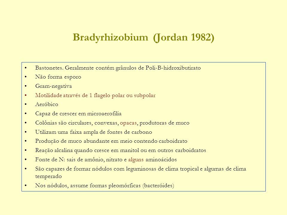 Bradyrhizobium (Jordan 1982) Bastonetes.