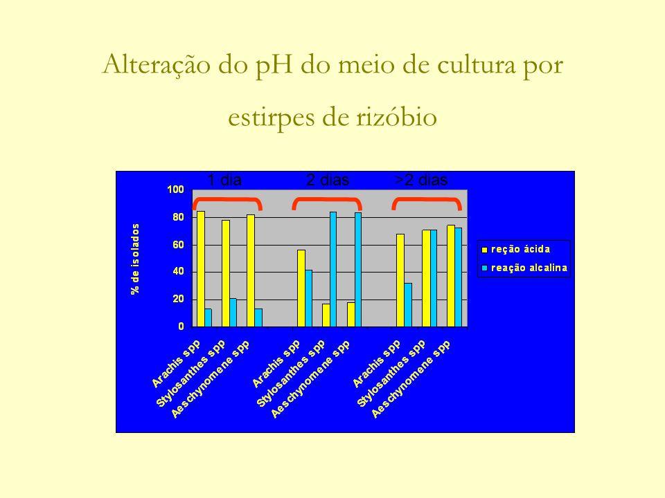 Alteração do pH do meio de cultura por estirpes de rizóbio 1 dia>2 dias2 dias