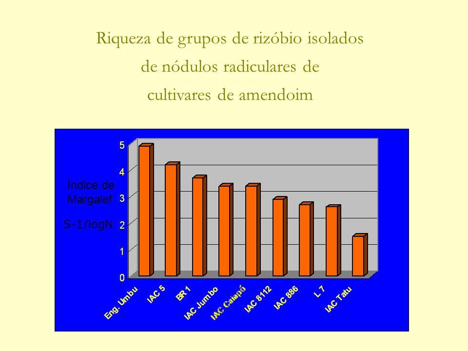 Índice de Margalef Riqueza de grupos de rizóbio isolados de nódulos radiculares de cultivares de amendoim S-1/logN