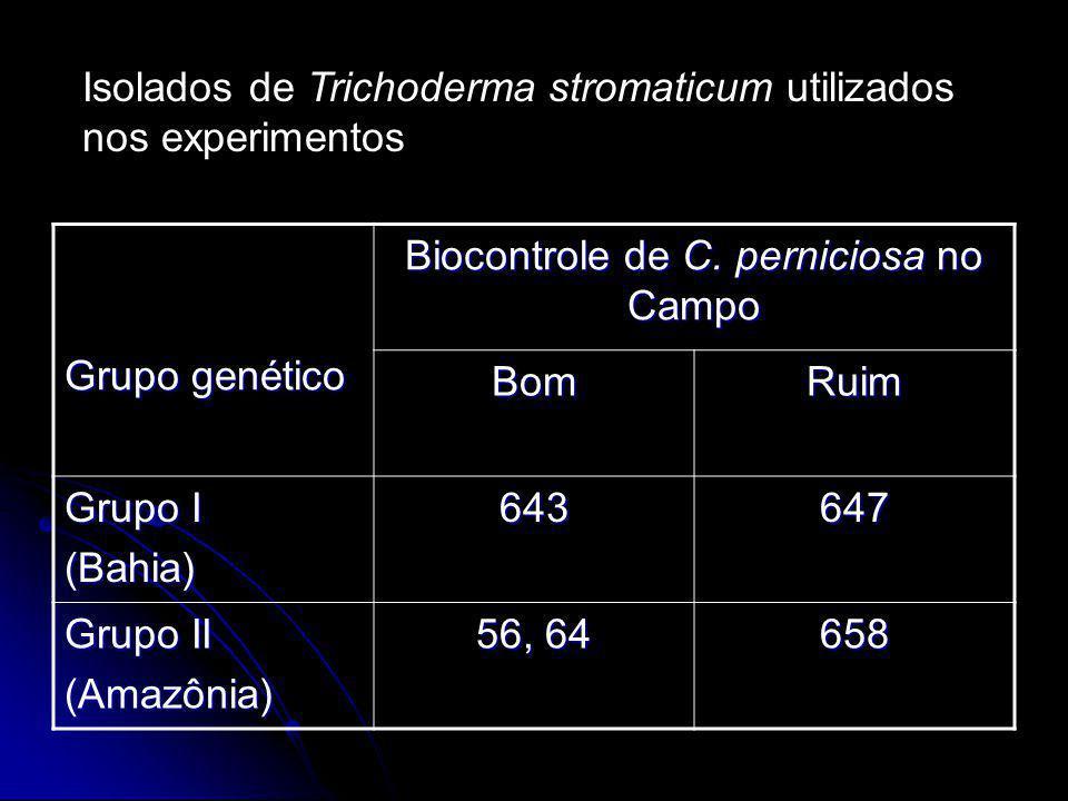 Grupo genético Biocontrole de C. perniciosa no Campo BomRuim Grupo I (Bahia)643647 Grupo II (Amazônia) 56, 64 658 Isolados de Trichoderma stromaticum