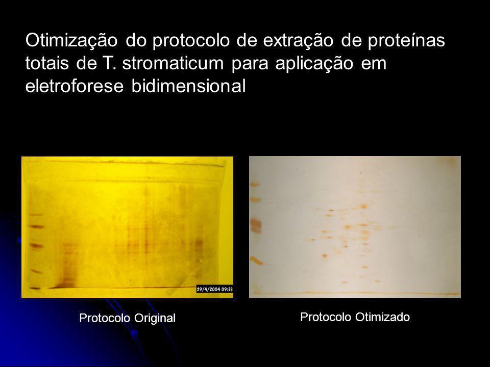 Otimização do protocolo de extração de proteínas totais de T. stromaticum para aplicação em eletroforese bidimensional Protocolo Original Protocolo Ot
