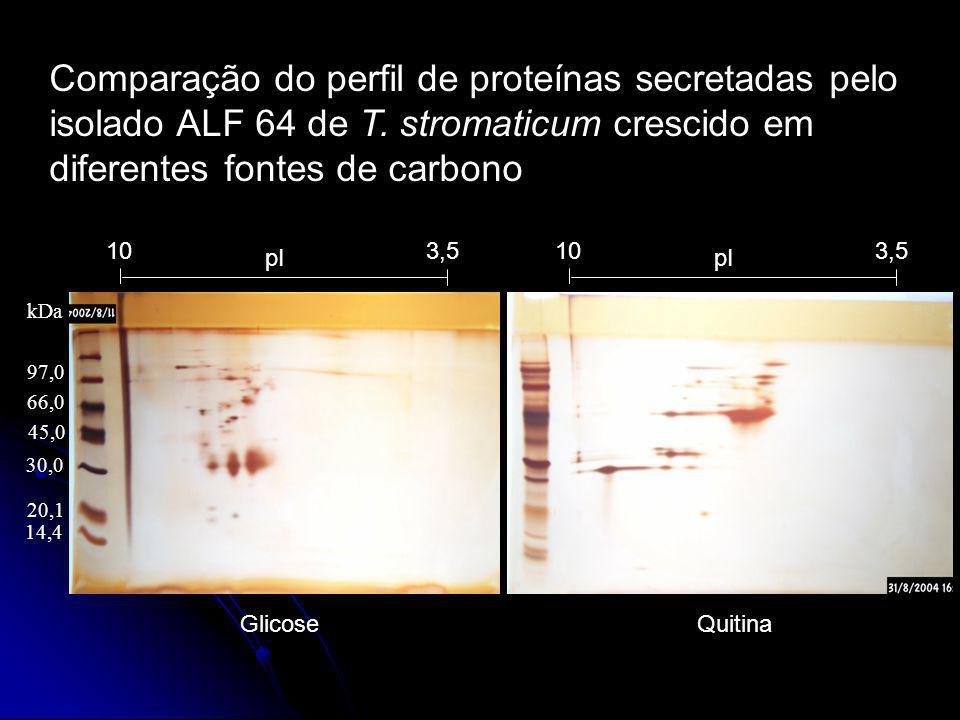 Comparação do perfil de proteínas secretadas pelo isolado ALF 64 de T. stromaticum crescido em diferentes fontes de carbono 97,0 66,0 45,0 14,4 20,1 3