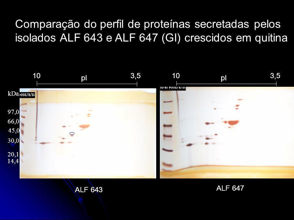 ALF 643 pI 3,510 97,0 66,0 45,0 14,4 20,1 30,0 kDa pI 3,510 ALF 647 Comparação do perfil de proteínas secretadas pelos isolados ALF 643 e ALF 647 (GI)