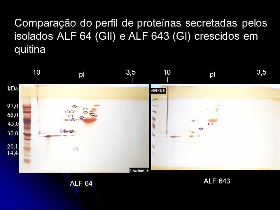 pI 3,510 ALF 64 97,0 66,0 45,0 14,4 20,1 30,0 kDa ALF 643 pI 3,510 Comparação do perfil de proteínas secretadas pelos isolados ALF 64 (GII) e ALF 643