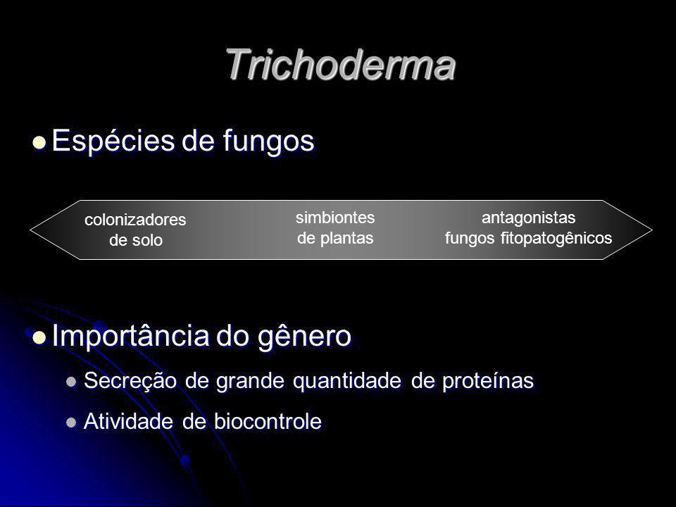 Trichoderma Espécies de fungos Espécies de fungos Importância do gênero Importância do gênero Secreção de grande quantidade de proteínas Secreção de g