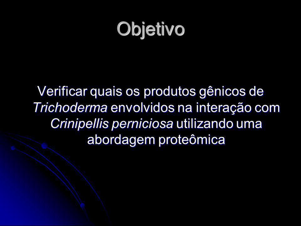 Objetivo Verificar quais os produtos gênicos de Trichoderma envolvidos na interação com Crinipellis perniciosa utilizando uma abordagem proteômica