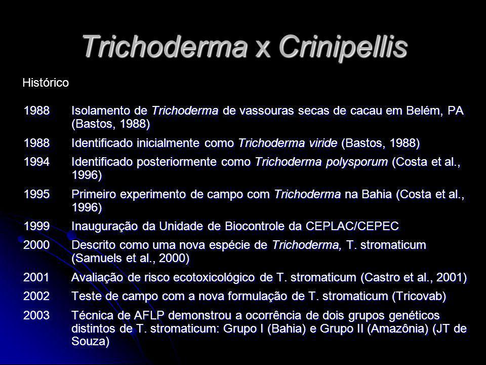 Trichoderma x Crinipellis 1988Isolamento de Trichoderma de vassouras secas de cacau em Belém, PA (Bastos, 1988) 1988Identificado inicialmente como Tri