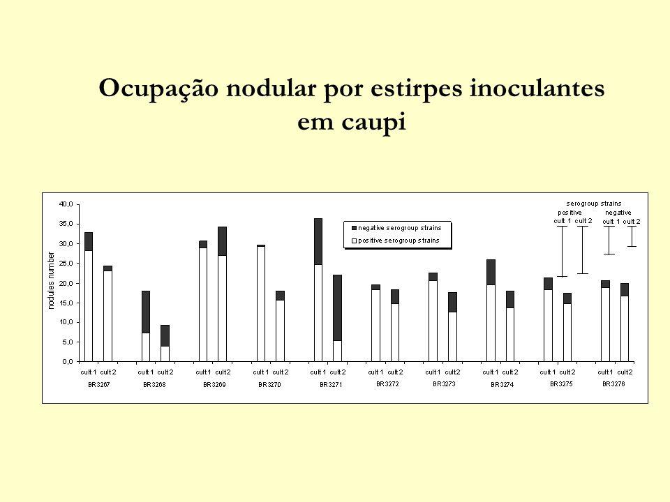 Ocupação nodular por estirpes inoculantes em caupi