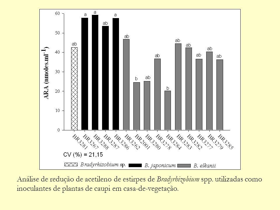 Análise de redução de acetileno de estirpes de Bradyrhizobium spp. utilizadas como inoculantes de plantas de caupi em casa-de-vegetação.