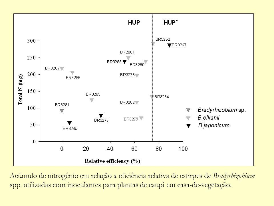 Acúmulo de nitrogênio em relação a eficiência relativa de estirpes de Bradyrhizobium spp. utilizadas com inoculantes para plantas de caupi em casa-de-